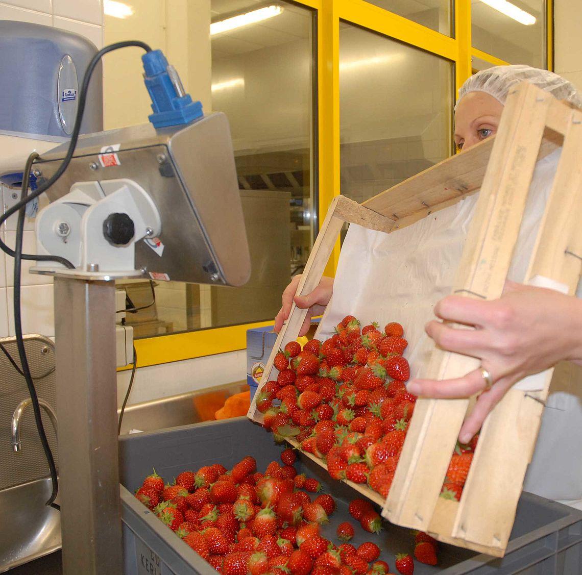Pesée des fraises