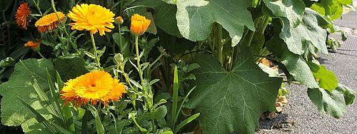 Trottoirs fleuris