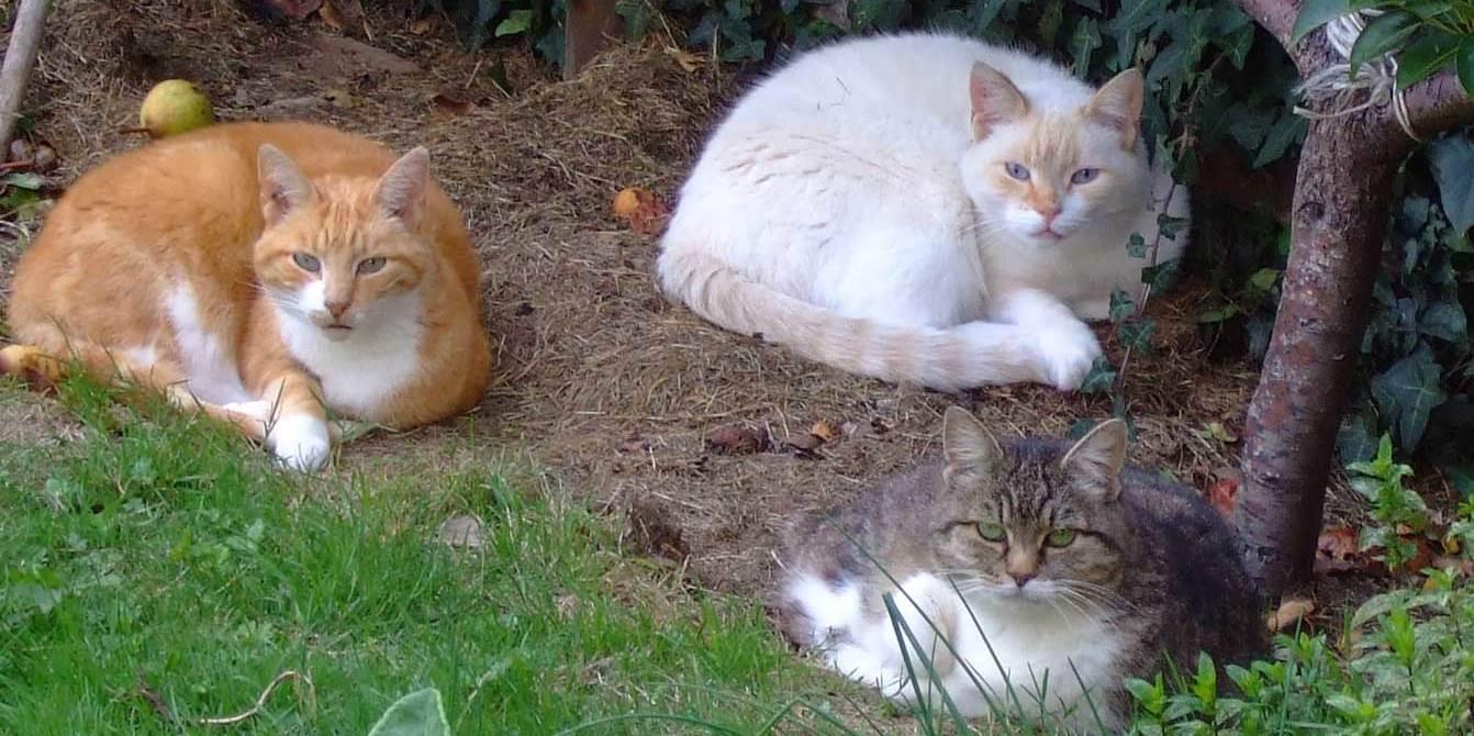 trois chats dans un jardin