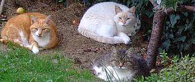 3 chats dans un jardin
