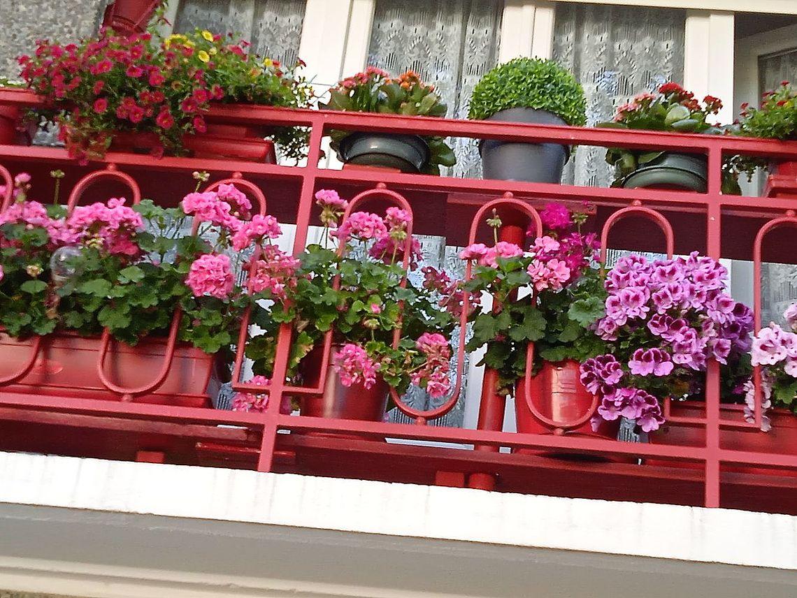 balcon de France Blanchard