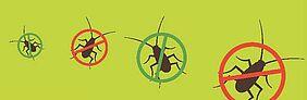 lutte contre les blattes et cafards