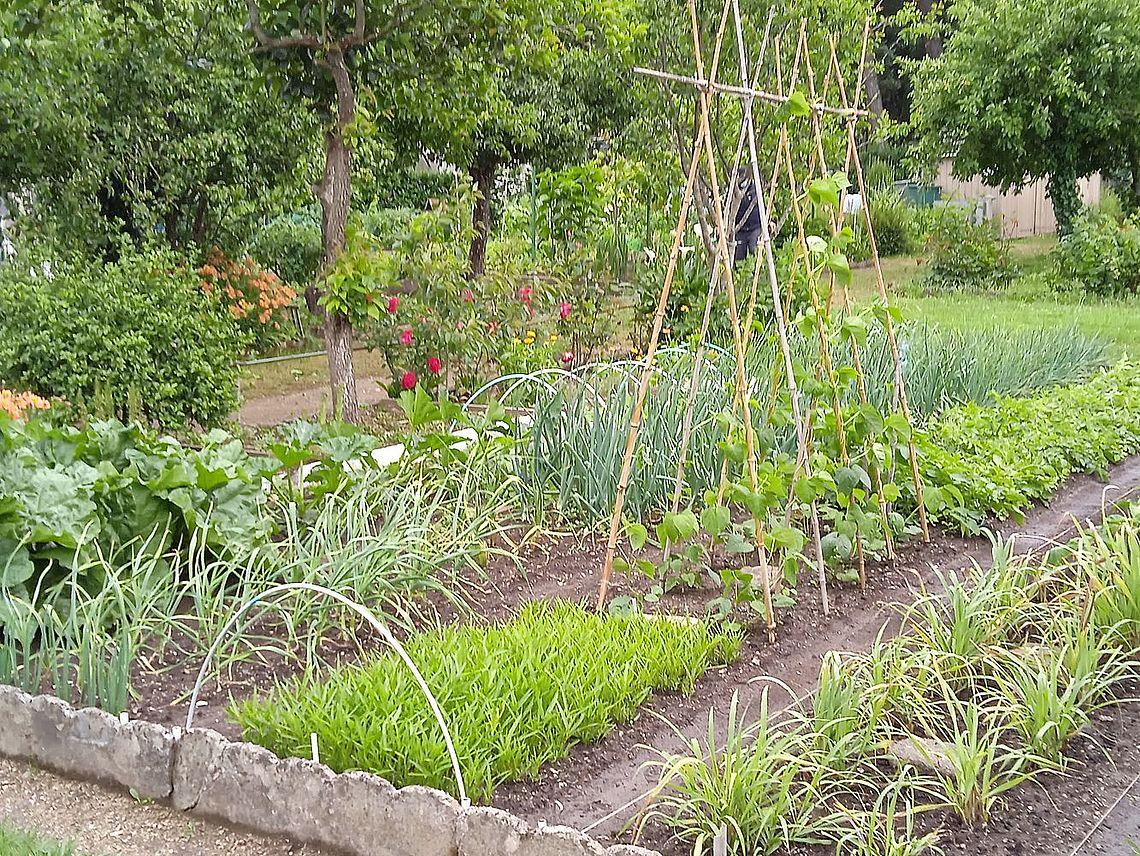 jardin de Bing Yong