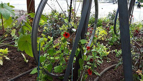 Suzanne aux yeux noirs palissée sur des roues de vélo - mai 2018