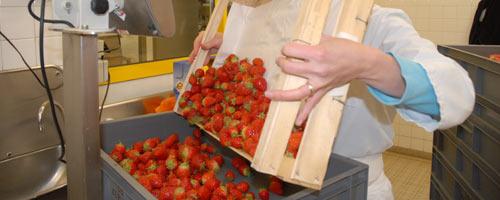 approvisionnement... les fraises !
