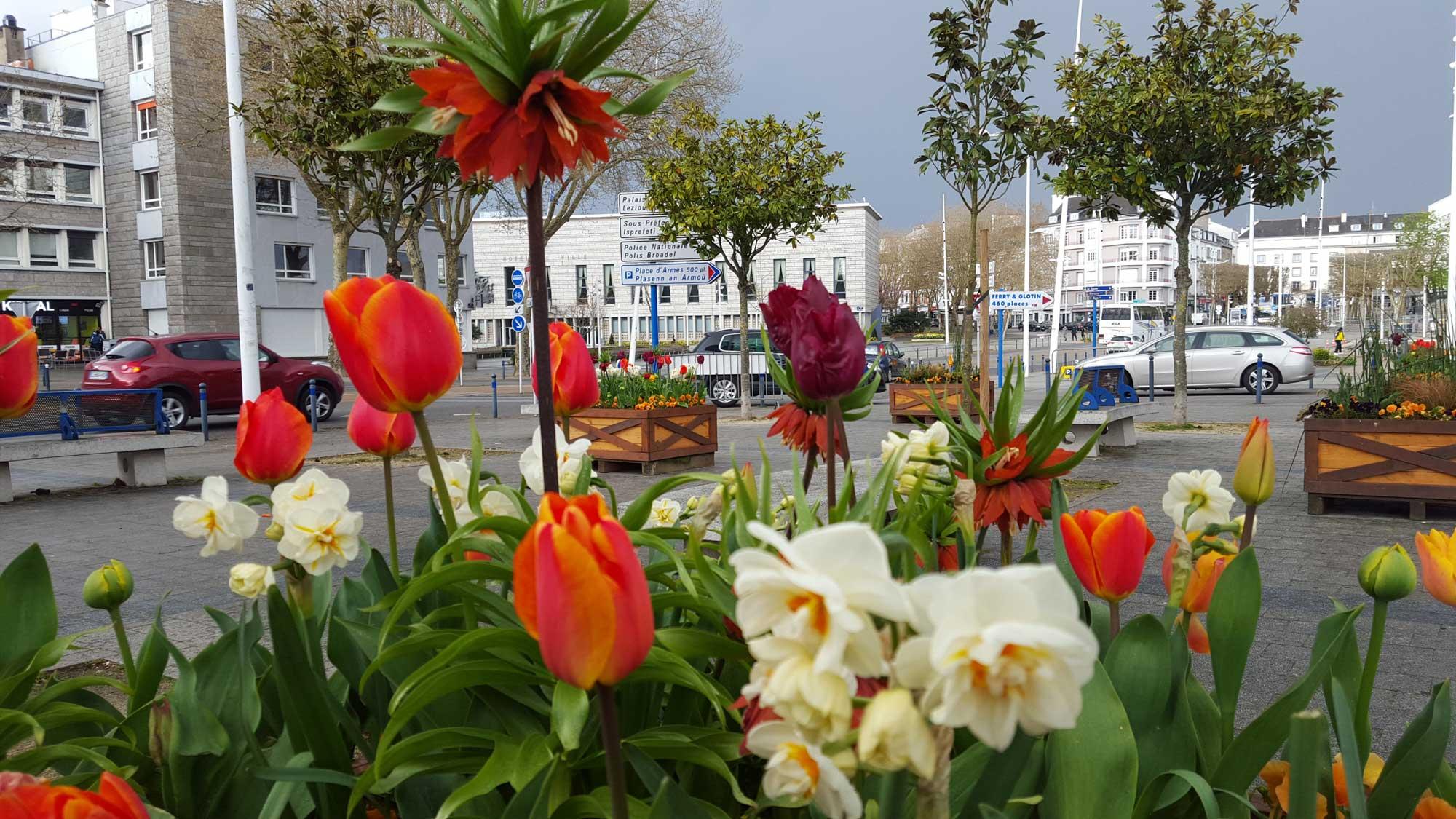 Fleurissement en bacs au centre-ville - avril 2018 - Cliquez pour voir un diaporama