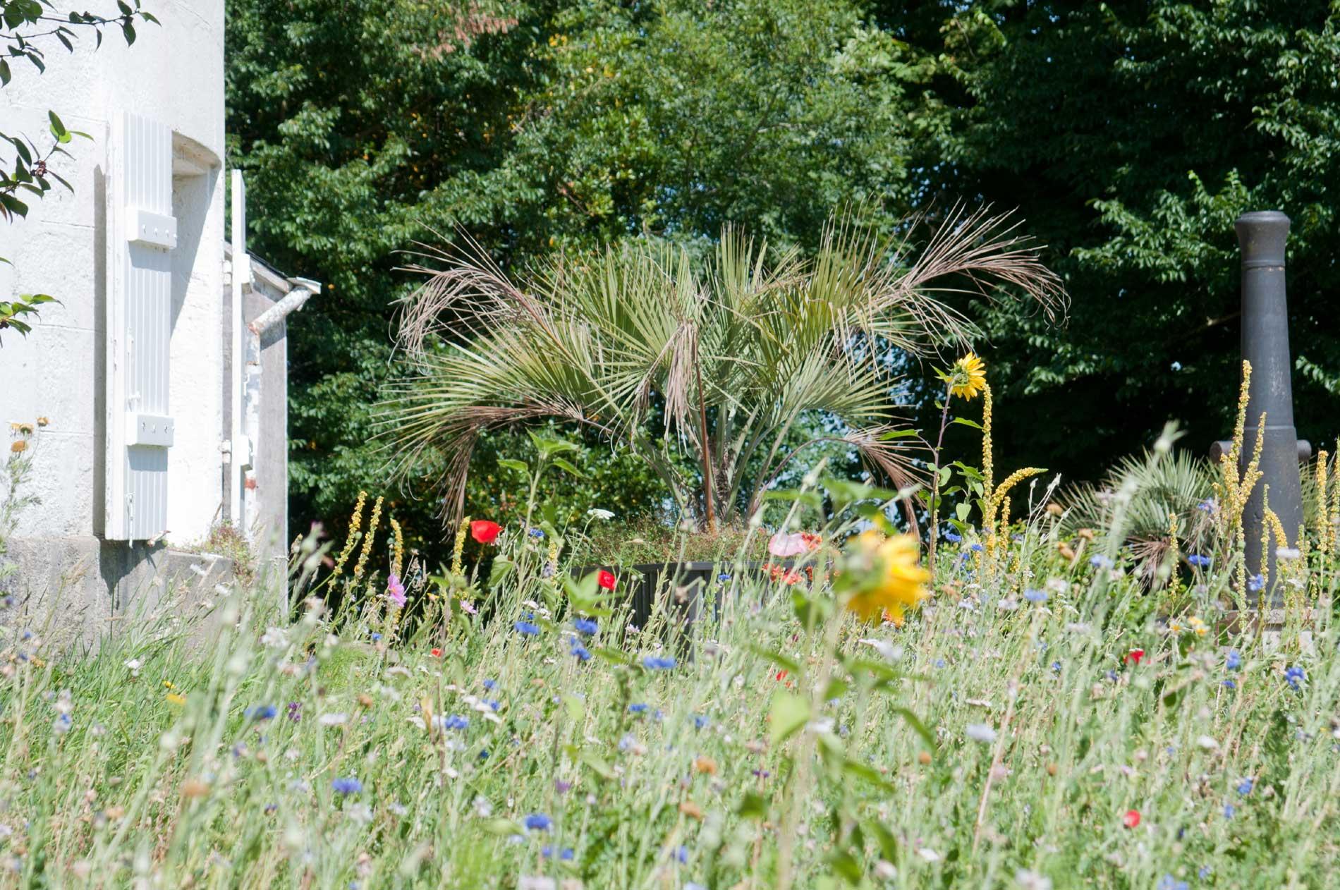 Prairie fleurie sur la colline du Faouëdic