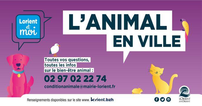 Dépliant sur la condition animale... cliquez !
