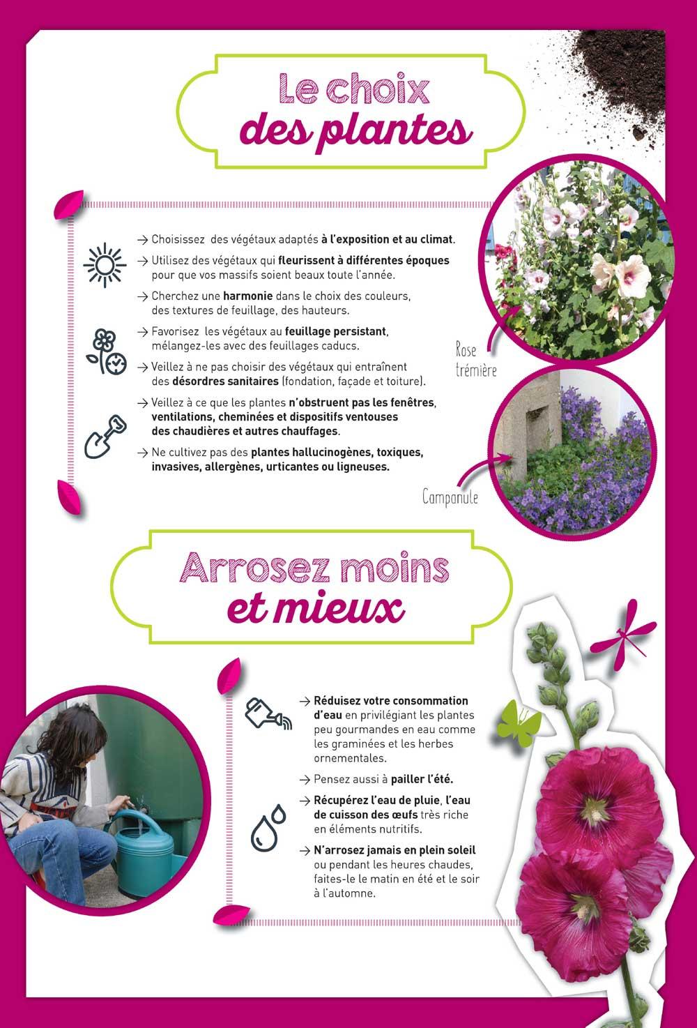 Conseils : choix des plantes et arrosage