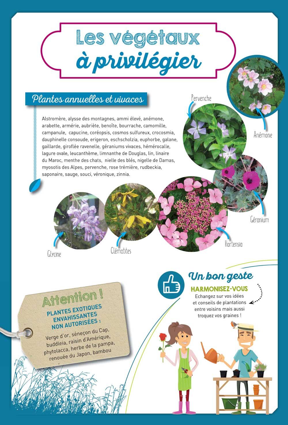 Conseils : plantes annuelles ou vivaces