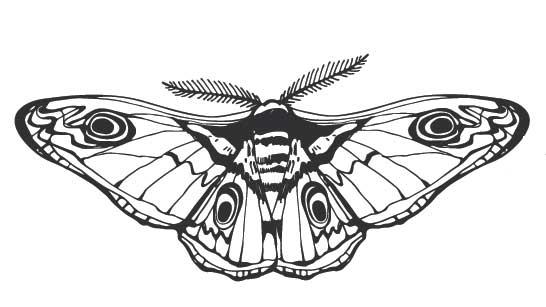 papillon de nuit - image Adobe Stock