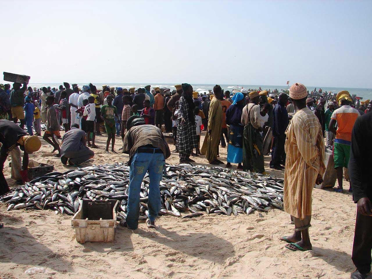 Retour de pêche, tri du poisson sur la plage à Cayar (Sénégal)