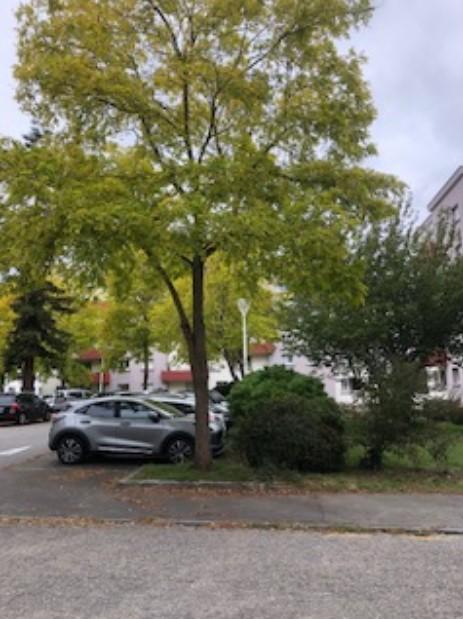 Place  Simone de Beauvoir - photo de Joël Briend